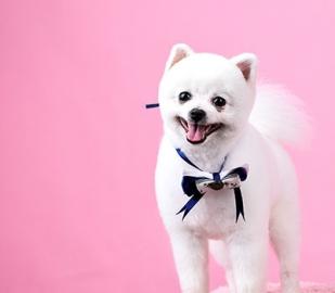 九龙坡宠物美容培训学校