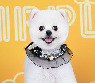重庆宠物美容学校