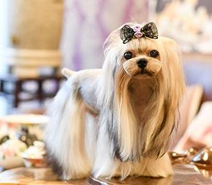 九龙坡宠物美容培训