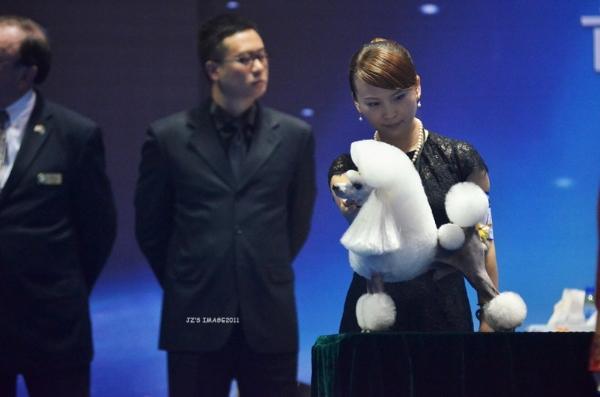 2011年美国国家展玩具贵宾优胜犬