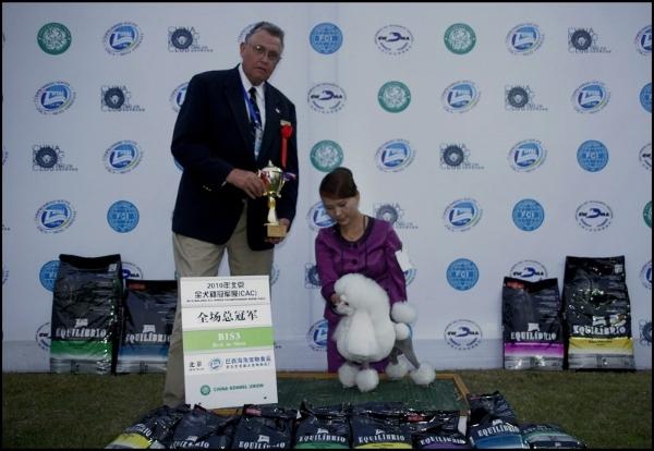 2010年度全犬种积分榜排行2,玩具犬排行1