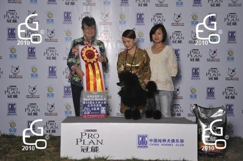 CKC第54届全犬种展B赛制BIS2